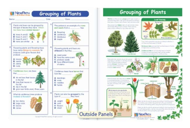 NewPath Learning Grouping of Plants Visual Learning Guide, Grades 3 - 5