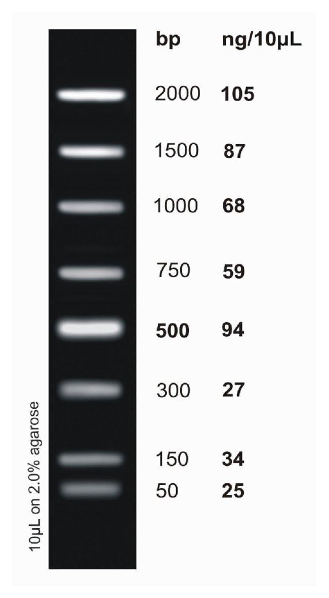 Fisher BioReagents&trade;&nbsp;<i>ex</i>ACTG<i>ene</i>&trade; DNA Ladders 2kb DNA Ladder; 50 to 2000bp; 8  bands Fisher BioReagents&trade;&nbsp;<i>ex</i>ACTG<i>ene</i>&trade; DNA Ladders