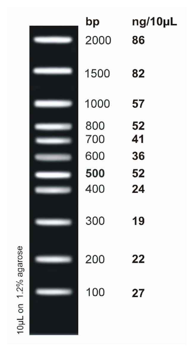 Fisher BioReagents&trade;&nbsp;<i>ex</i>ACTG<i>ene</i>&trade; DNA Ladders Low Range Plus DNA Ladder; 100 to 2000bp; 11  bands Fisher BioReagents&trade;&nbsp;<i>ex</i>ACTG<i>ene</i>&trade; DNA Ladders