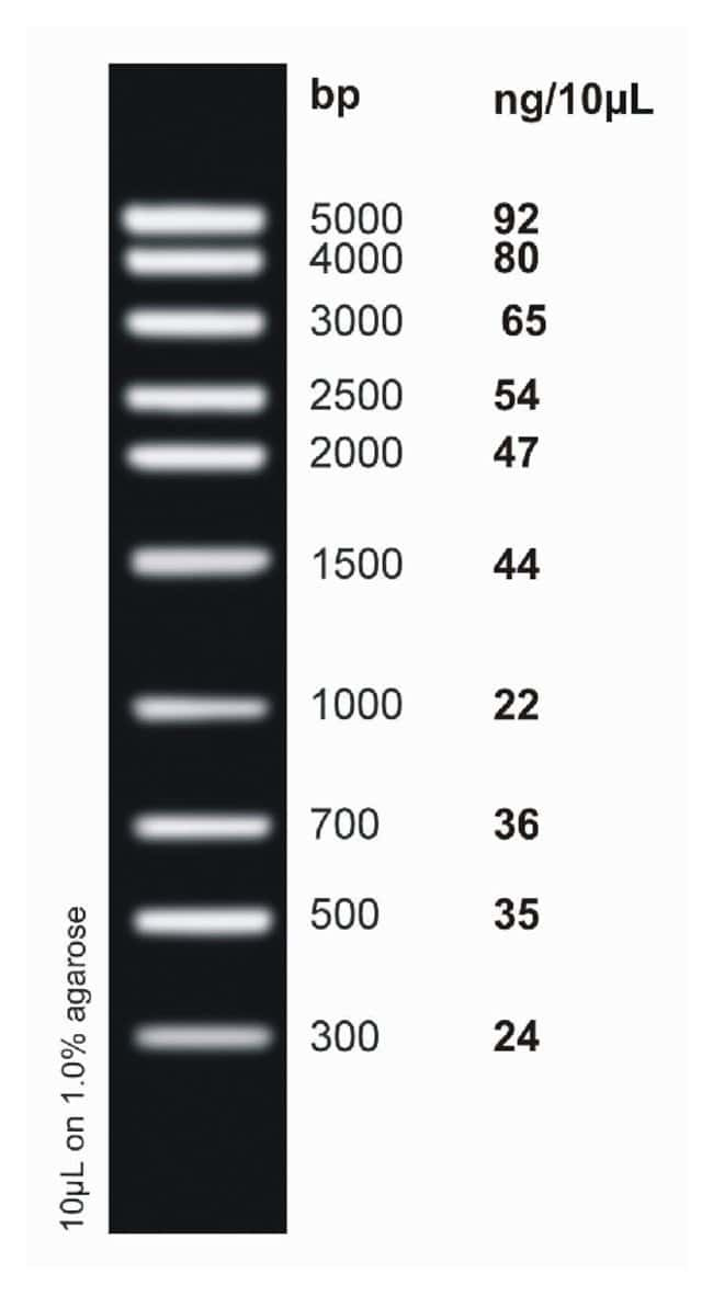 Fisher BioReagents&trade;&nbsp;<i>ex</i>ACTG<i>ene</i>&trade; DNA Ladders Escalera de ADN de rango medio; 300 a 5000 bp; 10 bandas Fisher BioReagents&trade;&nbsp;<i>ex</i>ACTG<i>ene</i>&trade; DNA Ladders