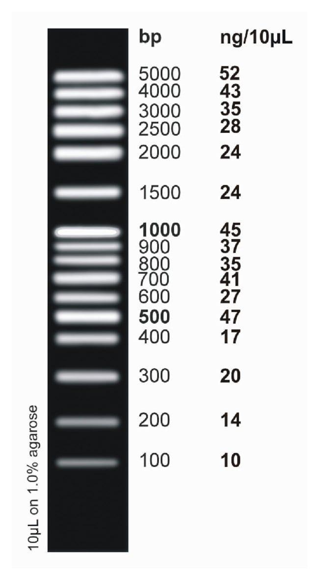 Fisher BioReagents&trade;&nbsp;<i>ex</i>ACTG<i>ene</i>&trade; DNA Ladders