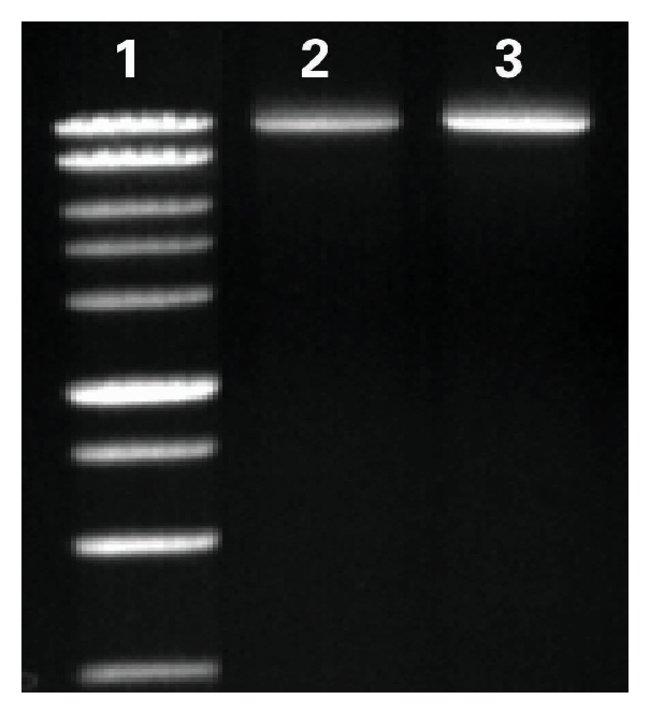 Fisher BioReagents exACTGene dNTPs:Life Sciences:Biochemicals and Reagents