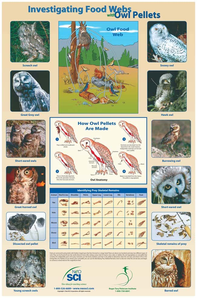 Investigating Food Webs with Owl Pellets Poster :Teaching Supplies:Classroom
