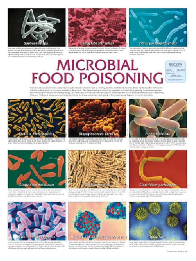 Microbiology Wall Charts :Teaching Supplies:Classroom Safety