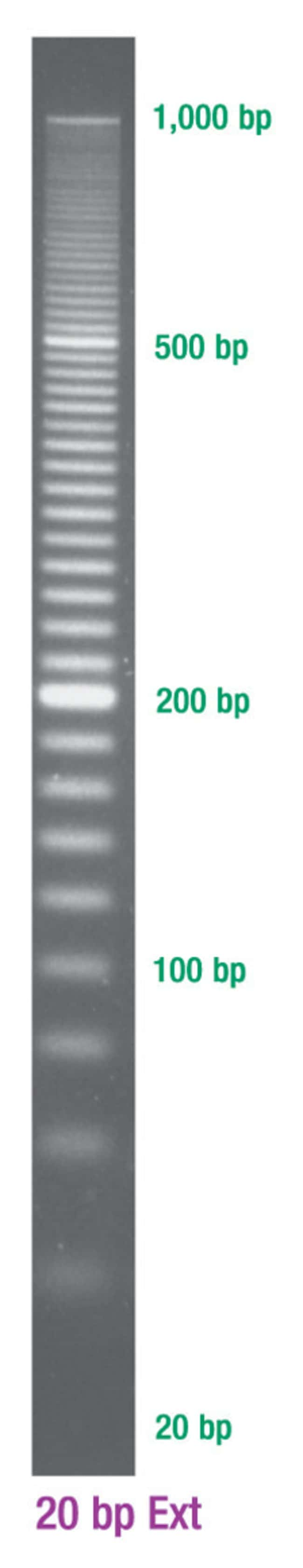 Lonza SimplyLoad DNA Ladders:Life Sciences:Biochemicals and Reagents