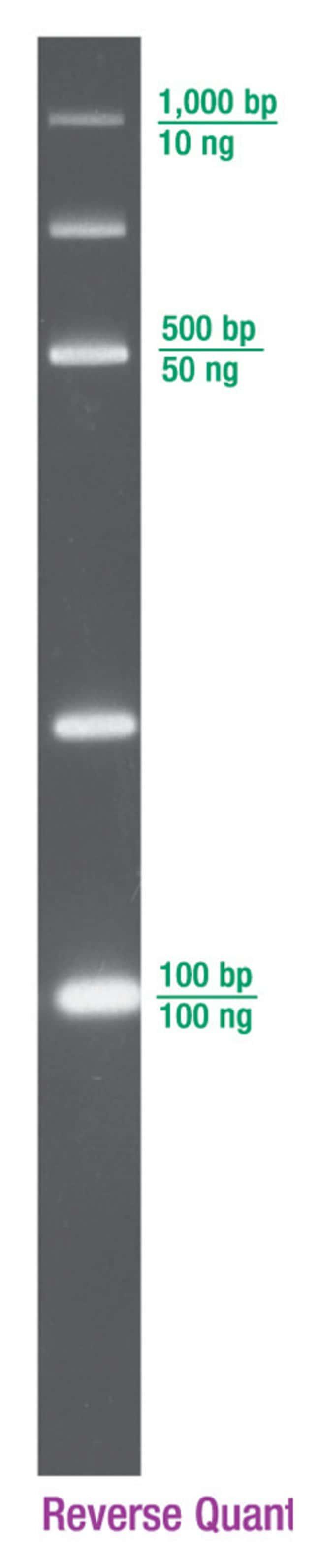 Lonza DNA QuantLadders:Life Sciences:Biochemicals and Reagents