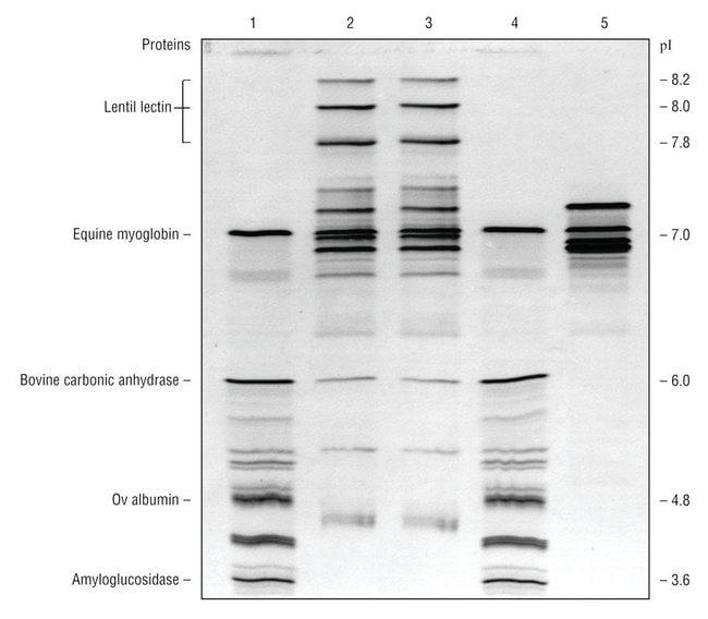 Lonza™IsoGel™ IEF Plates Gel plate; pH range: 3 to 10 Lonza™IsoGel™ IEF Plates