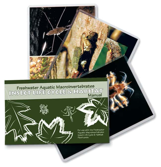 LaMotte Aquatic Macroinvertebrate Life Cycle and Habitat Flashcards  Insect