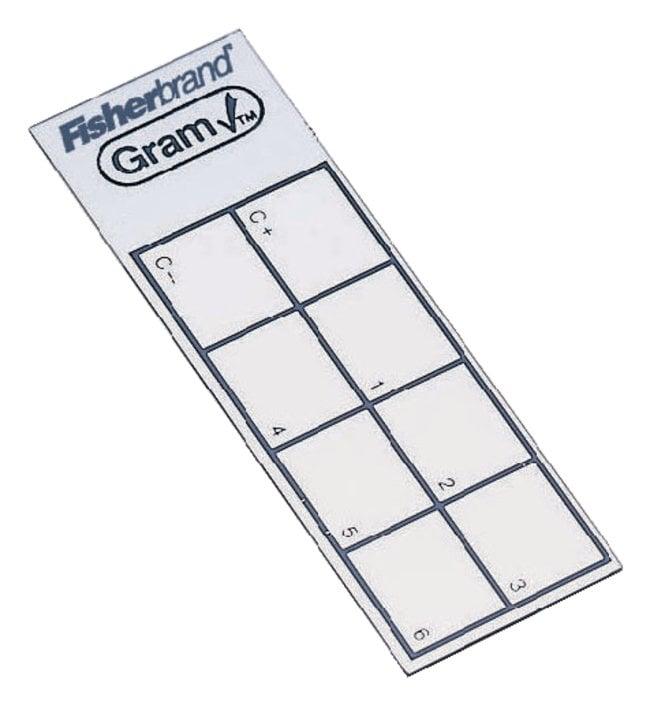 FisherbrandGram Control/Test Slides Individual foil packs; 50/Pk.:Diagnostic