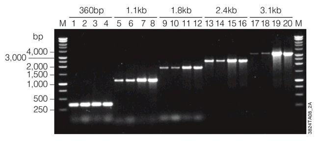 Promega GoTaq DNA Polymerase:Life Sciences:Biochemicals and Reagents