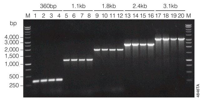 PromegaGoTaq Flexi DNA Polymerase:Molecular Biology Reagents and Kits:DNA