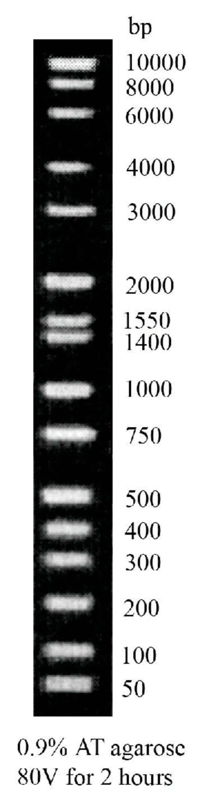 Fisher BioReagents Routine DNA Ladder :Life Sciences:Biochemicals and Reagents