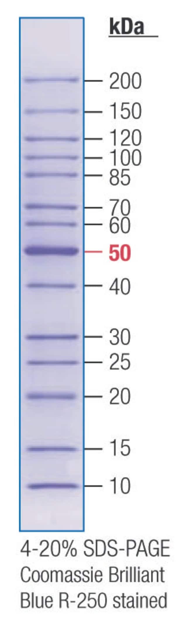 Fisher BioReagents EZ-Run Rec Protein Ladder:Electrophoresis, Western Blotting