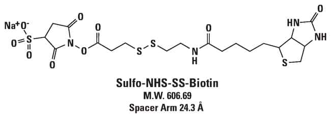 Thermo Scientific™ EZ-Link™ Sulfo-NHS-SS-Biotin, No Weigh Format: Protein Labelling Reagents Crosslinking, Labelling and Protein Modification