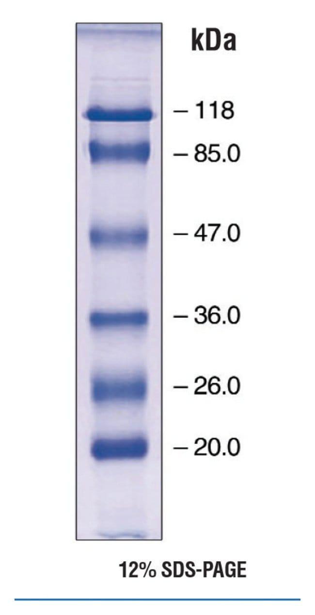 Fisher BioReagents EZ-Run Prestained Protein Marker :Electrophoresis, Western