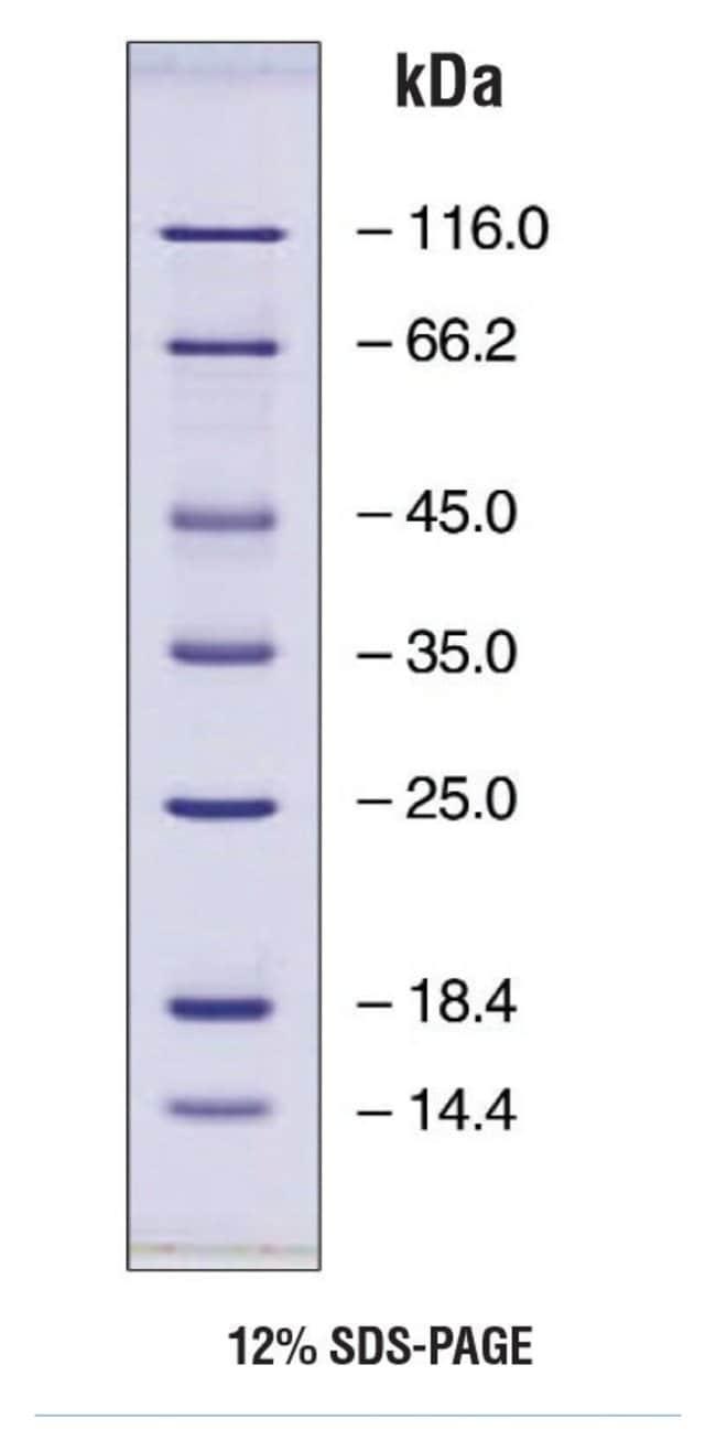 Fisher BioReagentsEZ-Run Protein Marker 500μL:Gel Electrophoresis Equipment
