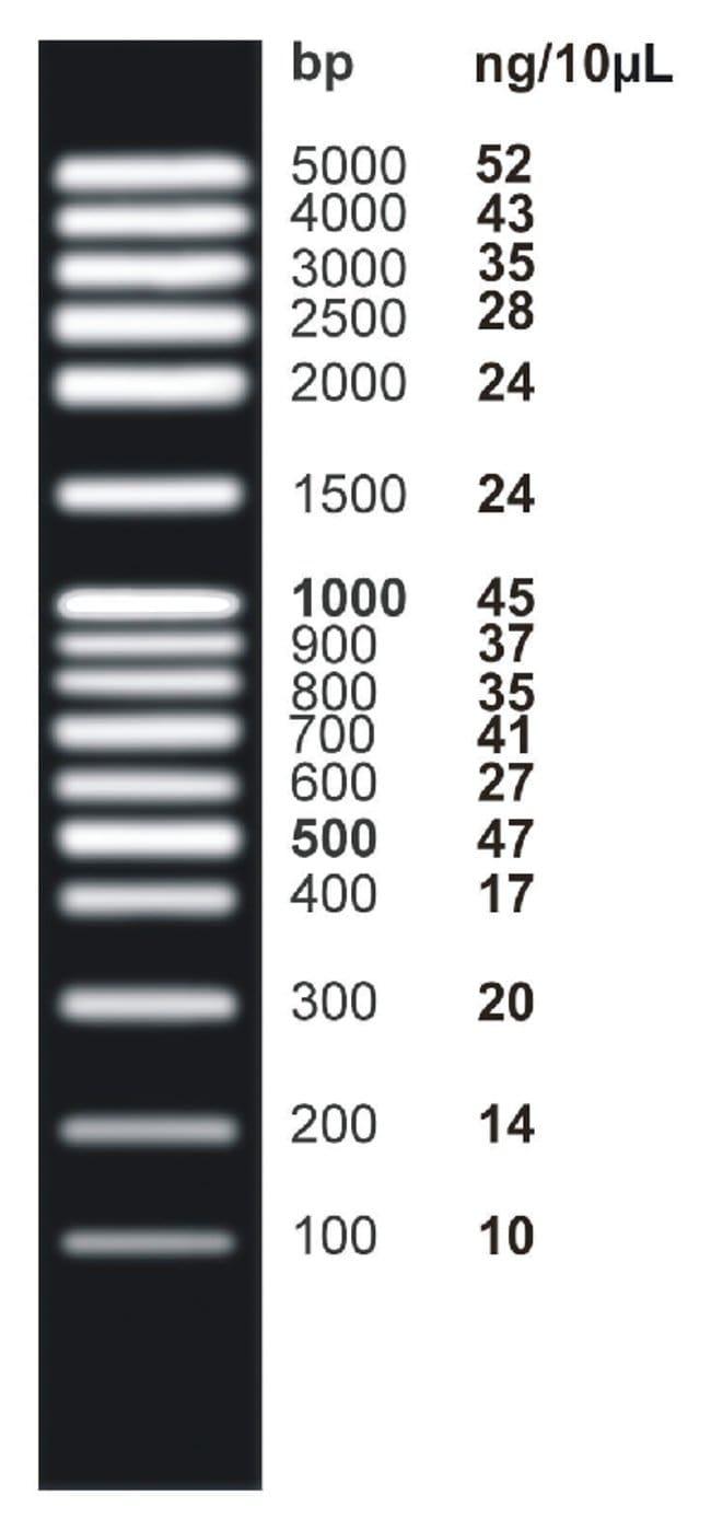 Fisher Bioreagents Exactgene Dna Ladders Mid Range Plus