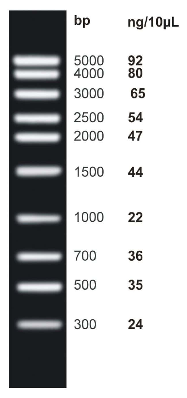 Fisher BioReagents&trade;&nbsp;<i>ex</i>ACTG<i>ene</i>&trade; DNA Ladders Mid Range DNA Ladder; 300 to 5000bp; 10  bands Fisher BioReagents&trade;&nbsp;<i>ex</i>ACTG<i>ene</i>&trade; DNA Ladders