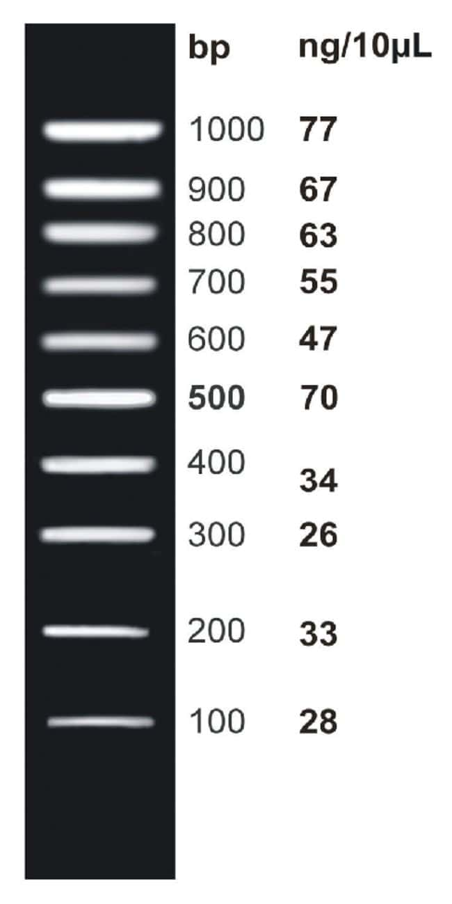Fisher BioReagents&trade;&nbsp;<i>ex</i>ACTG<i>ene</i>&trade; DNA Ladders 100 bp DNA Ladder; 100 to 1000bp; 10  bands Fisher BioReagents&trade;&nbsp;<i>ex</i>ACTG<i>ene</i>&trade; DNA Ladders
