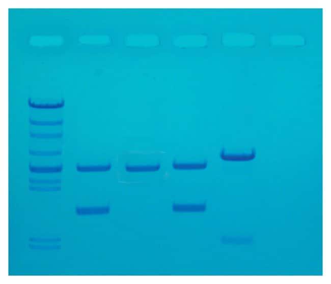 Edvotek™DNA Fingerprinting by PCR Amplification