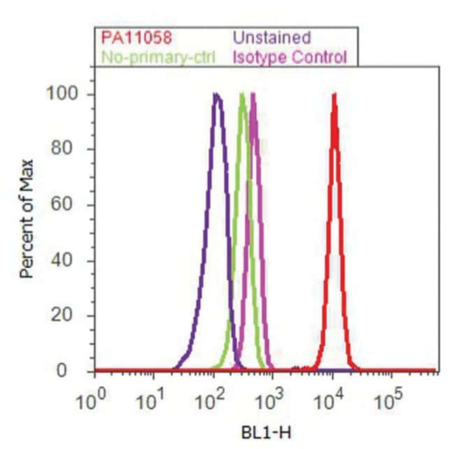 IRS1 Rabbit anti-Human, Mouse, Polyclonal, Invitrogen 100 µg; Unconjugated