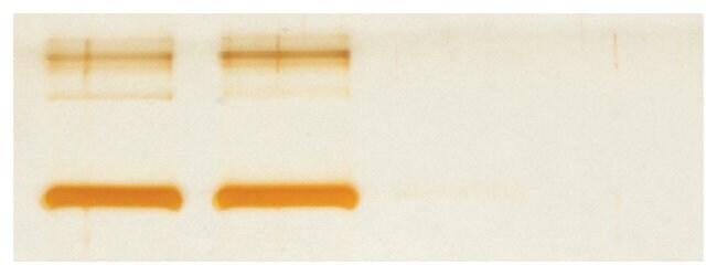 Thermo Scientific Zeba Micro Spin Desalting Columns, 40K MWCO, 75 L:Life