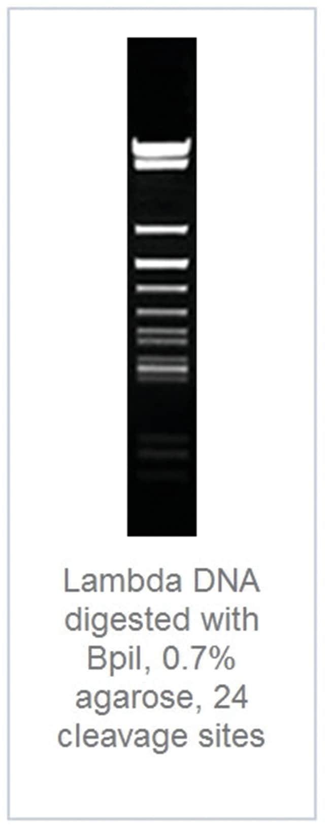 Thermo Scientific™BpiI (BbsI) (10 U/µL): Restriktionsenzyme Enzyme und Inhibitoren