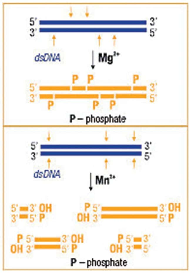 Thermo Scientific™DNase I, RNase-free, HC (50 U/µL)
