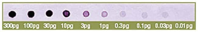 Thermo Scientific Biotin DecaLabel DNA Labeling Kit :Life Sciences:Biochemicals