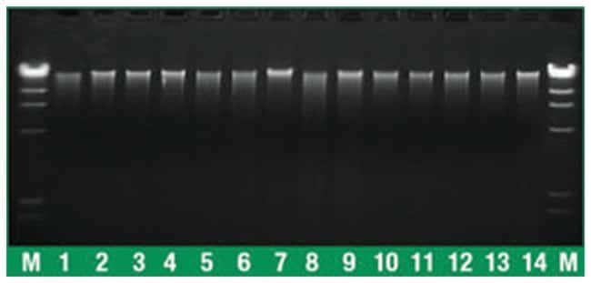 Thermo Scientific GeneJET Plant Genomic DNA Purification Kit :Life Sciences:Biochemicals