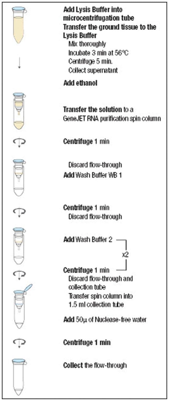 Thermo Scientific GeneJET Plant RNA Purification Kit:Life Sciences:Biochemicals