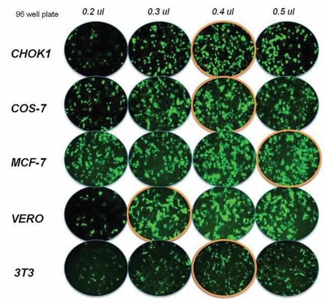 InvitrogenLipofectamine 2000 Transfection Reagent:Biochemical Reagents:Nucleic