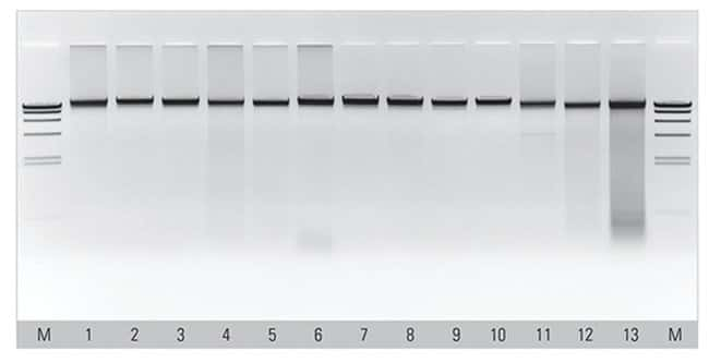 Thermo Scientific™MagJET Genomic DNA Kit: Biochemicals and Reagents Life Sciences