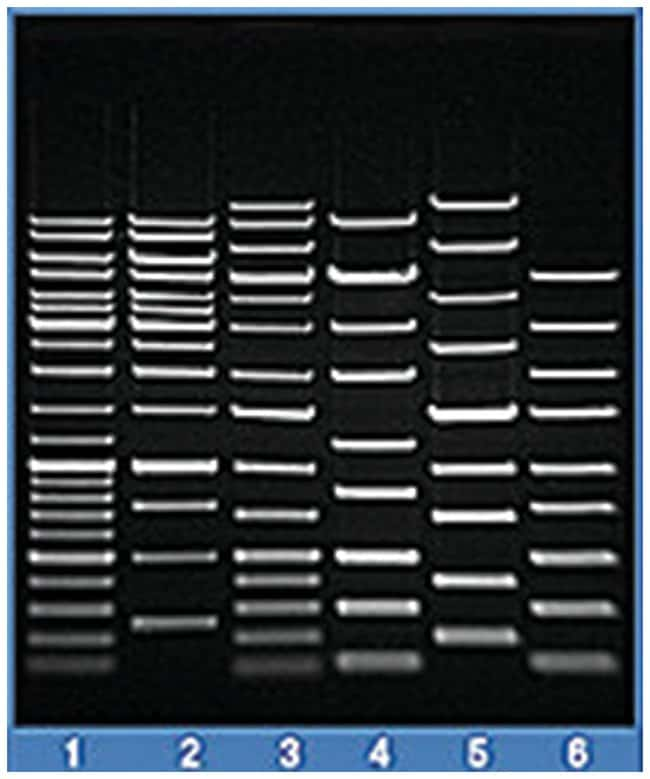 Thermo Scientific TopVision Agarose:Life Sciences:Biochemicals and Reagents