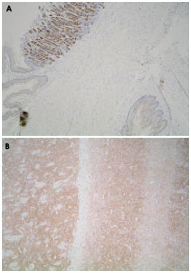 Leprotl1, Rabbit, Polyclonal Antibody, Abnova 25µg; Unlabeled:Life