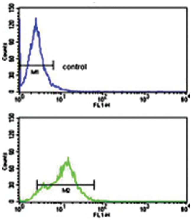 ACVRL1 (C-terminus), Rabbit, Polyclonal Antibody, Abnova 400µL; Unlabeled