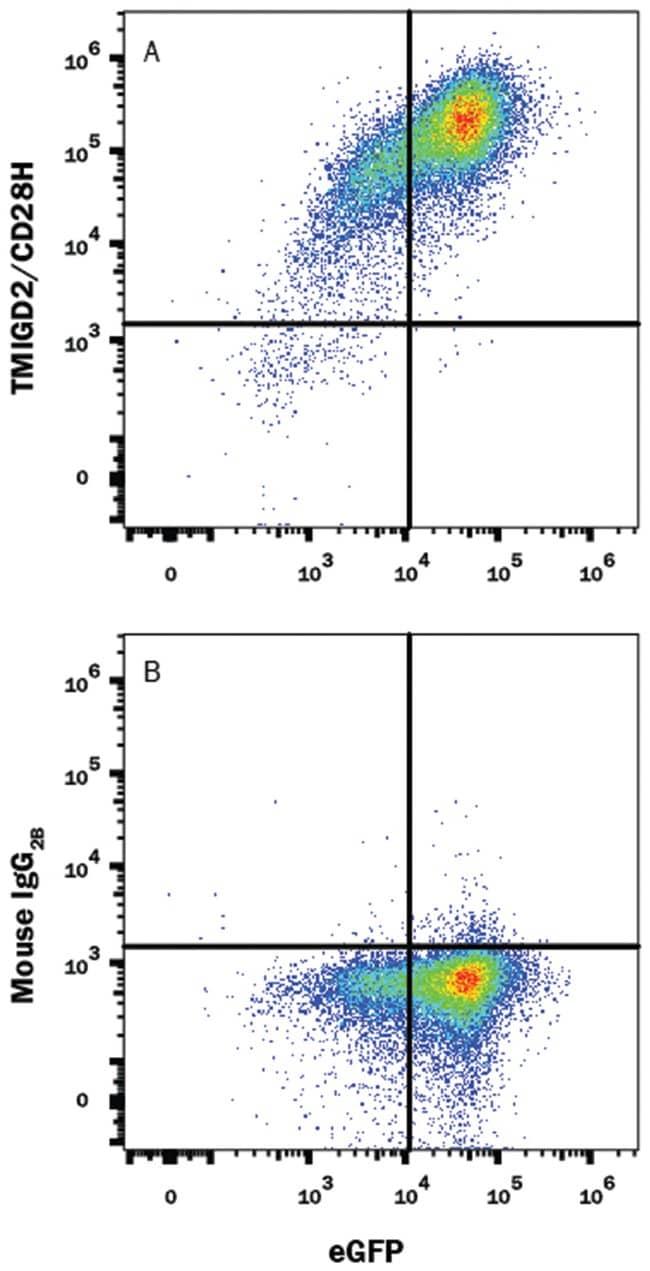 TMIGD2/CD28H Mouse anti-Human, Clone: 953743, R::