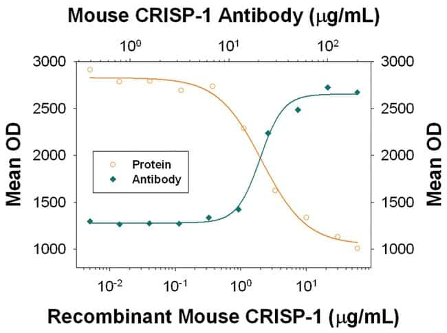 CRISP-1 Rat anti-Mouse, Clone: 840017, R::