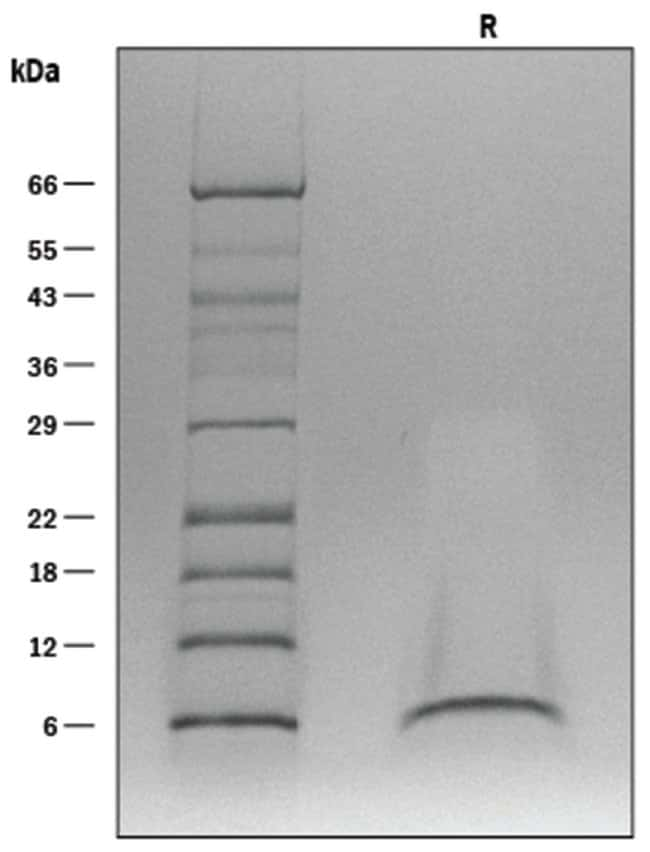 R ProDots Human EGF Recombinant Protein:Life Sciences:Protein Biology