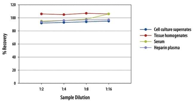 R Mouse Erythropoietin/EPO Quantikine ELISA Kit  One 96-well plate:Electrophoresis,