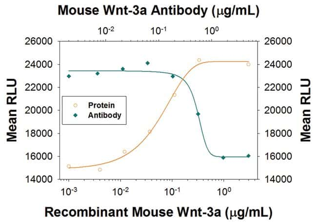 Wnt-3a Rat anti-Human, Mouse, Clone: 930769, R::