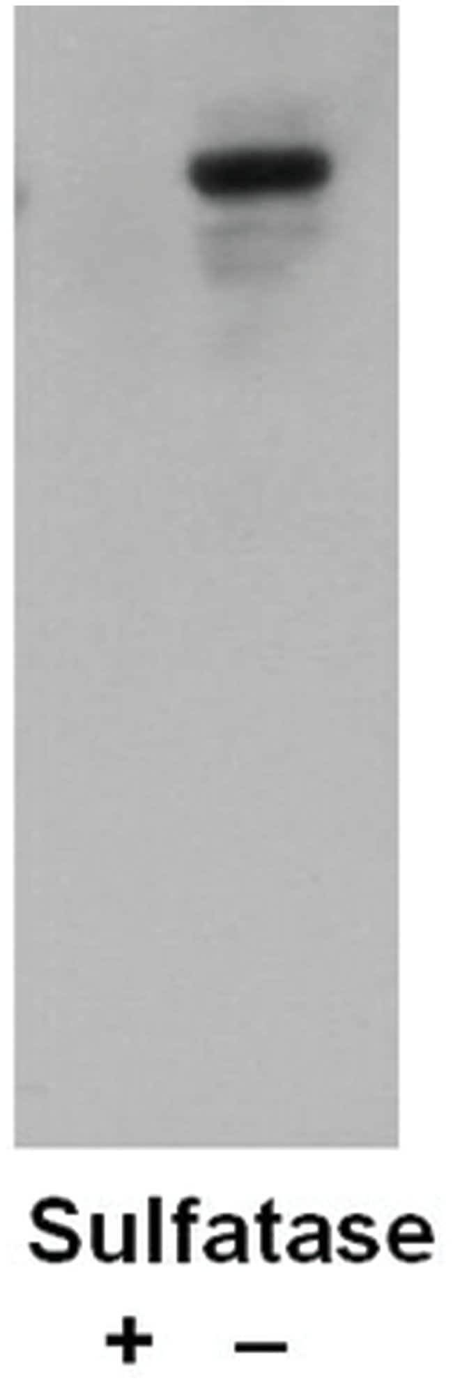 Sulfotyrosine Mouse anti-All, Clone: Sulfo-1C-A2, MilliporeSigma 100μL;