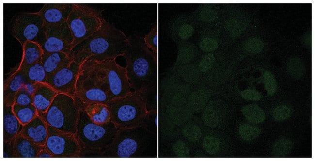 MilliporeSigma Bin1, Mouse, Alexa Fluor 488, Clone: 99D, 100µL; Alexa