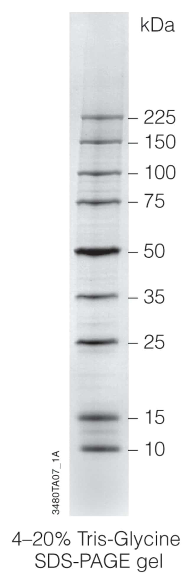 PromegaBroad Range Protein Molecular Weight Marker