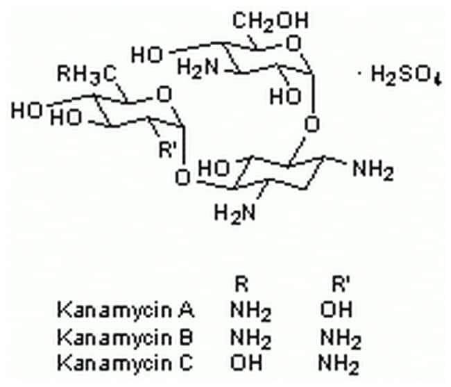 MilliporeSigmaCalbiochem Kanamycin Sulfate:Antibiotics and Supplements:Antibiotics