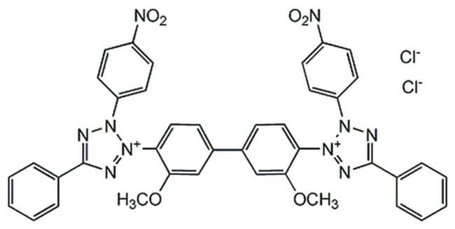 MilliporeSigma Calbiochem p-Nitroblue Tetrazolium Chloride 250mg:Life Sciences