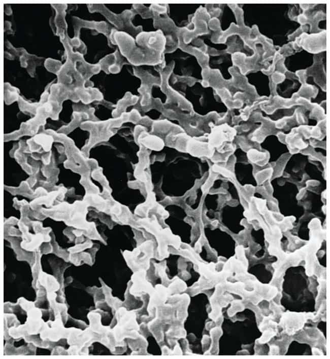 Merck™ MF-™ Mixed Cellulose Ester Membranes with Grid: 0.45μm Pore Size: Membranes for Filtration Filtration