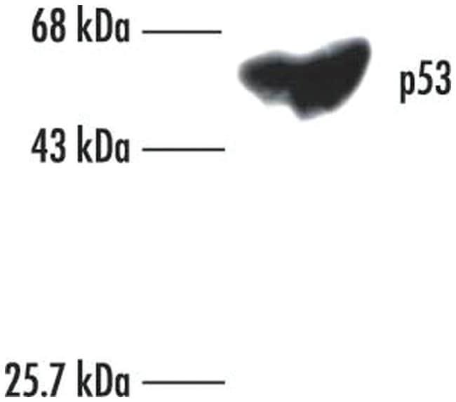 MilliporeSigma p53 (Pantropic), Mouse, Unlabeled, Clone: DO-1,::