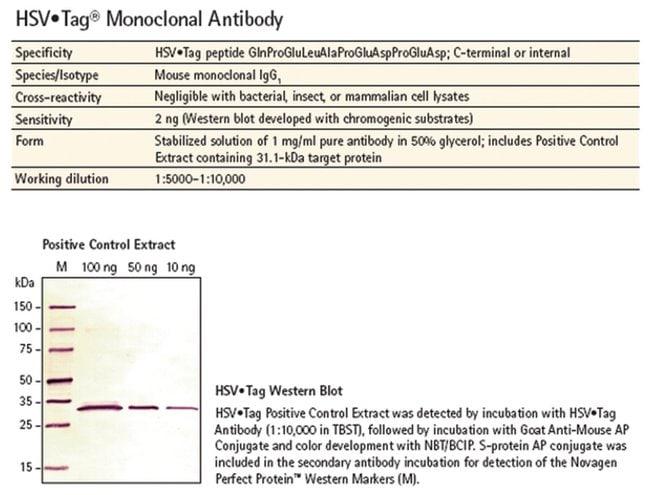 MilliporeSigma HSV Tag Monoclonal Antibody,::