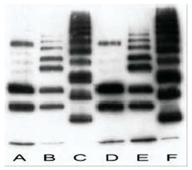 MilliporeSigma anti-Ubiquitin Clone: FK2, 100µg, Unlabeled:Life Sciences